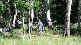 Silver Topped Sasquatch