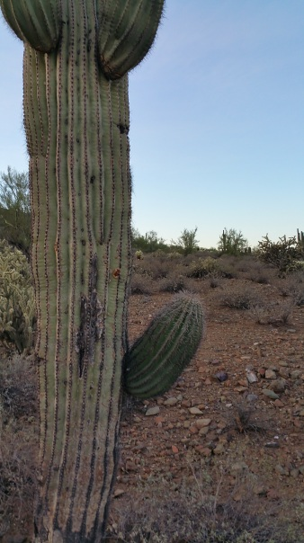 Boy Saguaro Cactus