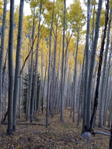 Fall Hiking in Lockett Meadow, Flagstaff, Arizona