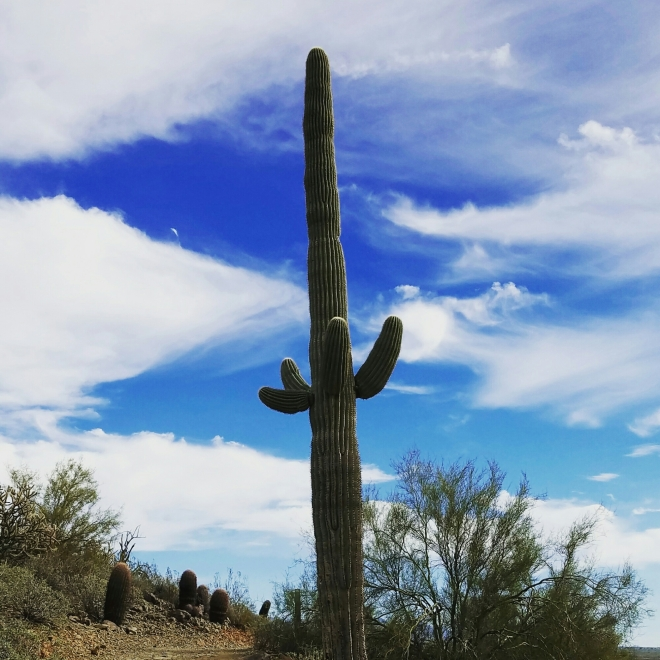 #hiking #arizona #desert #saguaro #cactus