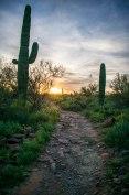 Apache Trail Saguaro on Trail Hiking in Arizona