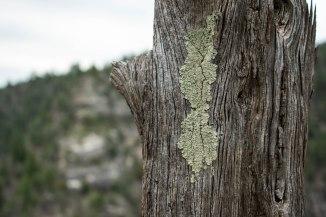 Walnut Canyon Hiking Flagstaff Arizona