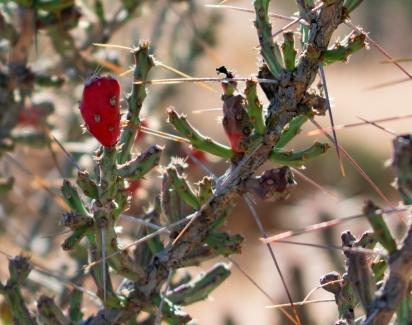 Apache Wash Trail Path Cactus 16